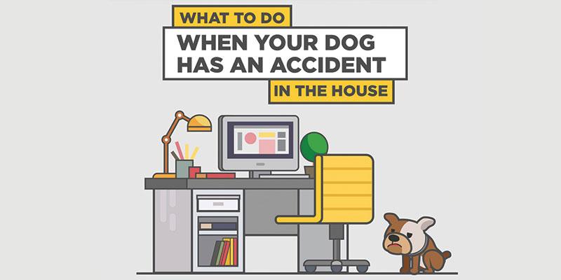 Blog Dog Accident Dr Chemdry