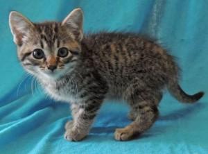 Tiny Tom