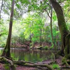 O'Leno State Park & River Rise. Near Columbia County, FL.