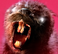 Zombeavers to Take a Bite Out of the UK