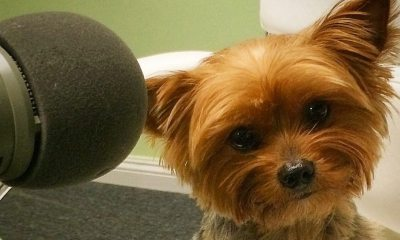 Arwen small - Help The Movie Crypt to Save The Yorkies AGAIN!