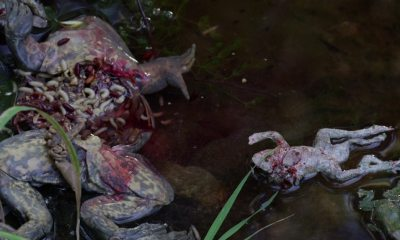 strangenaturebanner1200x627 - Exclusive STRANGE NATURE Clip Has TONS of Dead, Mutated Frogs