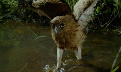 deadbydawnnatgeobanner1200x627 - Exclusive: Nature is Hungry and Ferocious in Nat Geo's DEAD BY DAWN