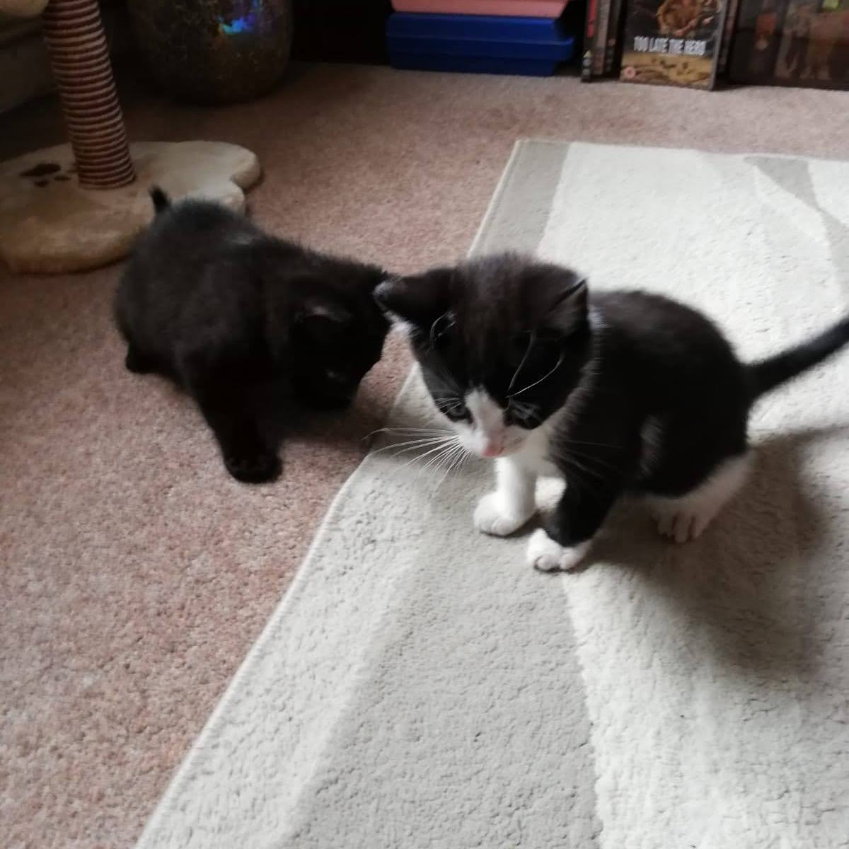 2 small kittens