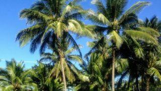 ハワイ 家 広い