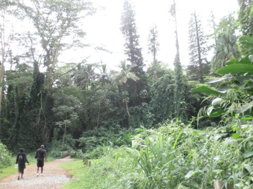 マノア ジャングル 緑いっぱい コオラウ山脈