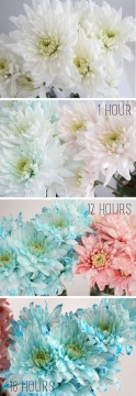 Dyeing Flowers with Food Coloring Tutorial   Dream a Little Bigger Learn how to dye white flowers with Dream a Little Bigger