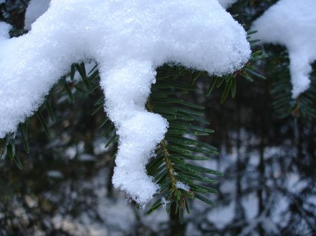 Winter2010 003