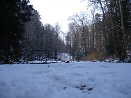 Winter2010 008