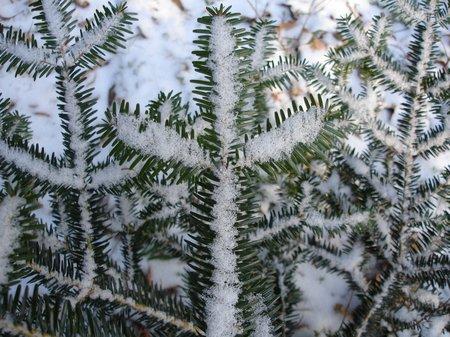 Winter2010 013