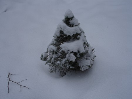 Winter2010 035