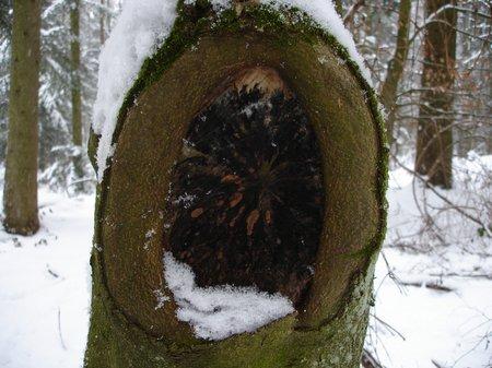 Winter2010 055