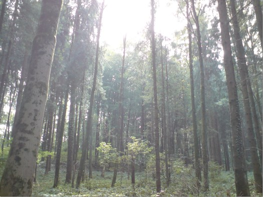 Wald0610 (2)