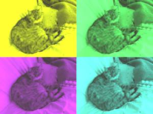 Unsere kleine und alte Schnupfenkatze