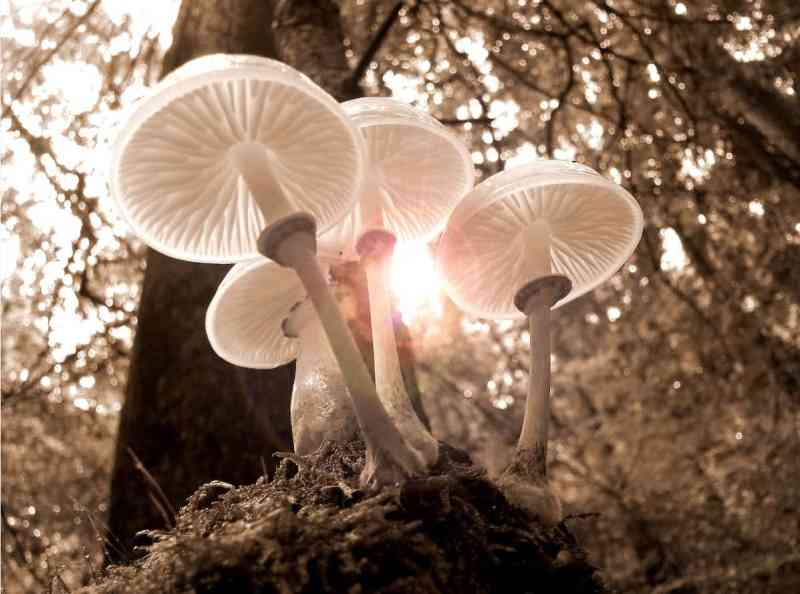 Mushrooms in sunlight in a forest