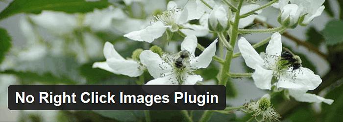 no-right-click-images-pugin