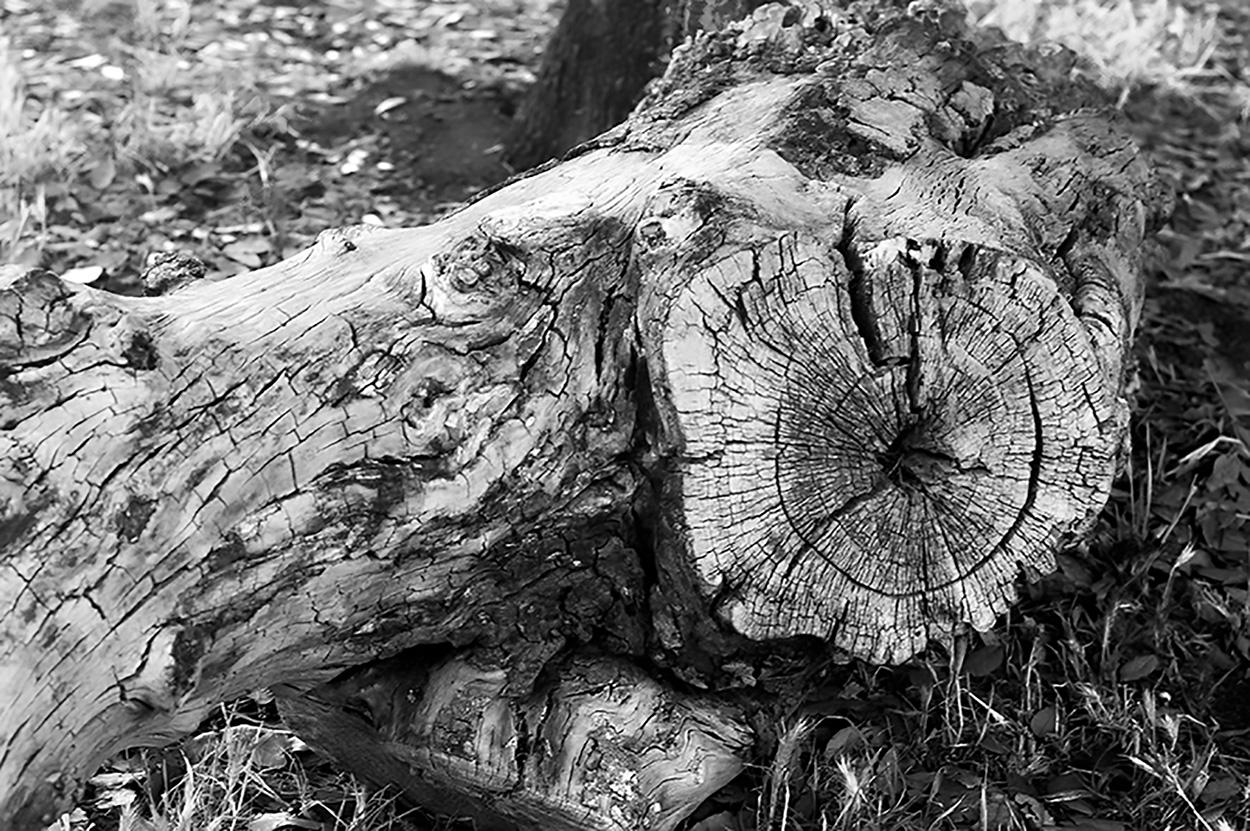 albero foto di Morgan Capasso