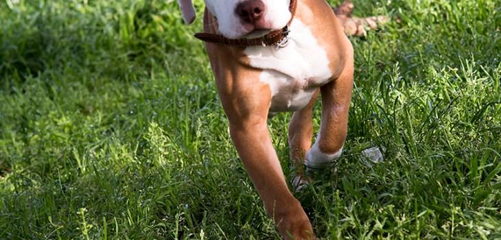 Cuccioli crescono photo by Morgan Capasso