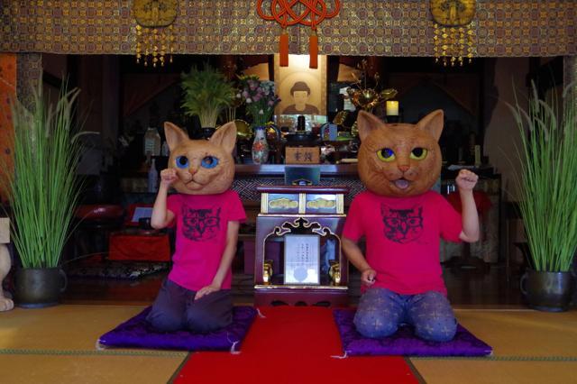 tempio dei gatti