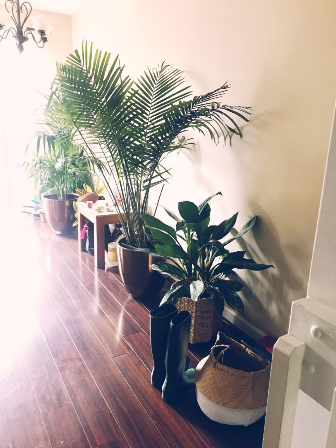 my-new-pass-time-plant-shopping-and-gardening-dreaming-loud-3