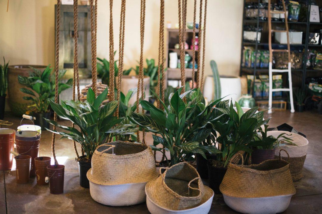 plant-shopping-dreaming-loud