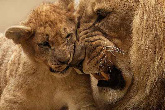 lion family dream interpretations suggest lottery and casino wins,Lottery and casino win dreams, this dream indicates that you will win a lottery