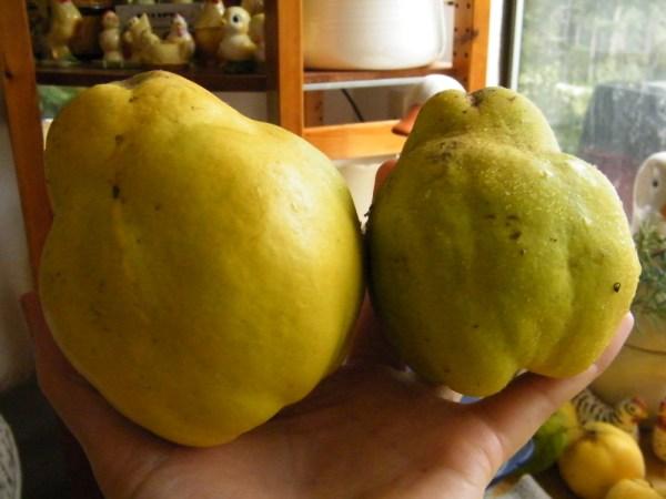 Pineapple quinces