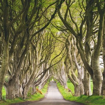 Dark hedges of Armoy - Game of Thrones