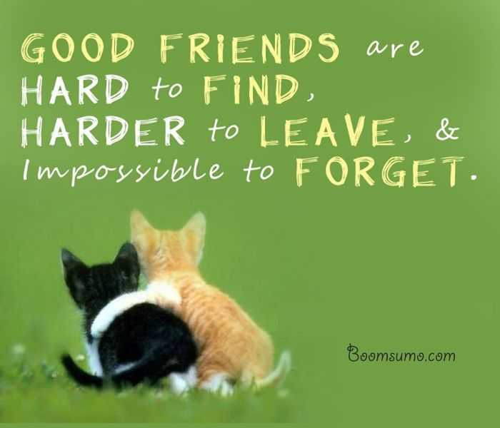best friendship quotes and sayings impossible to forget my friend