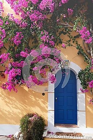 Bougainvillaea in Assos