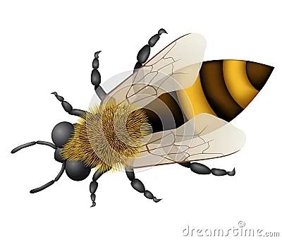 Vector bee