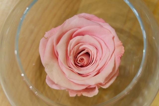 Che cosa sono le rose stabilizzate