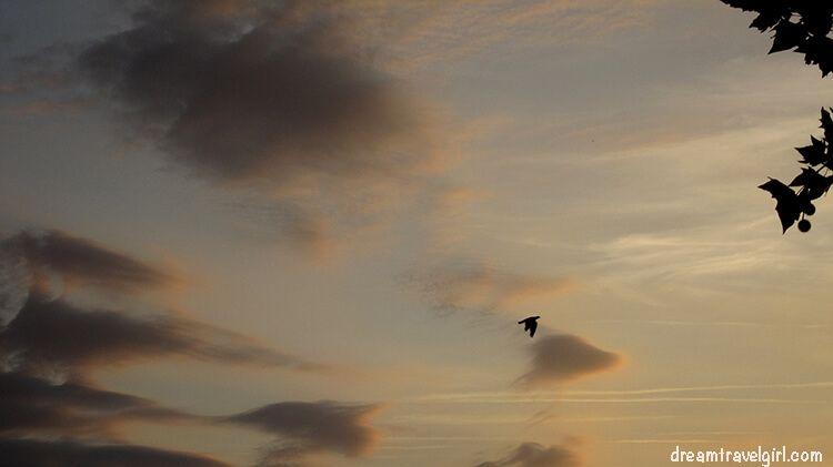 France_Toulouse_sky-birds