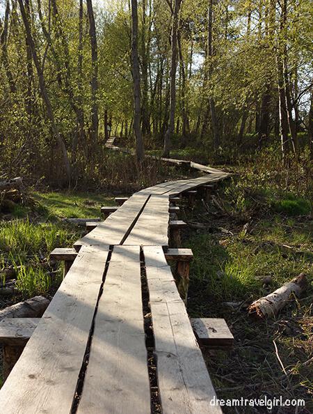 wooden path in Äkkeküla park