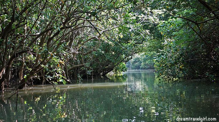 India_Kerala_Poovar_backwaters01