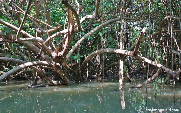 India_Kerala_Poovar_backwaters02
