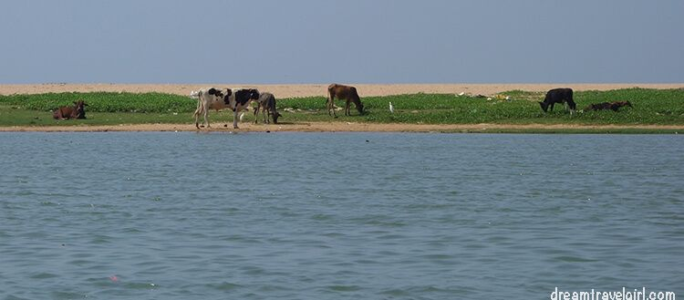 India_Kerala_Poovar_backwaters06