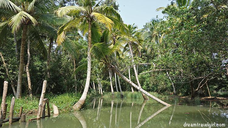 India_Kerala_Poovar_backwaters10