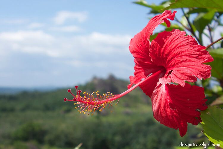 India_red-flower
