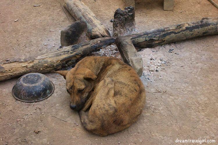 Laos_Huay-Bo_fire-dog