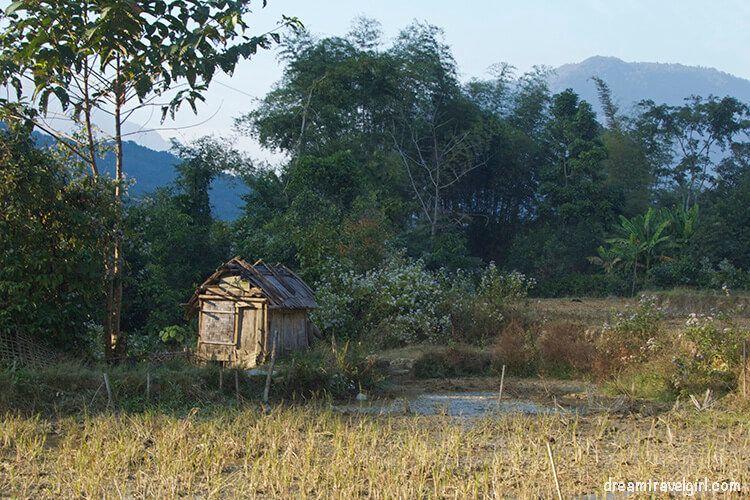Laos_Huay-Bo_rice-fields