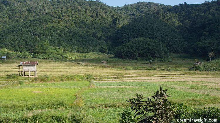 Laos_Luang_Namtha_rice-fields01