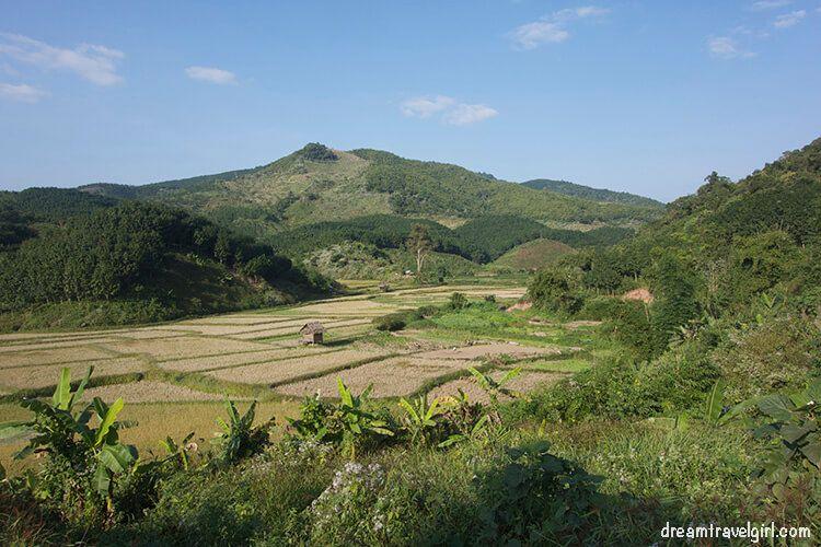 Laos_Luang_Namtha_rice-fields03