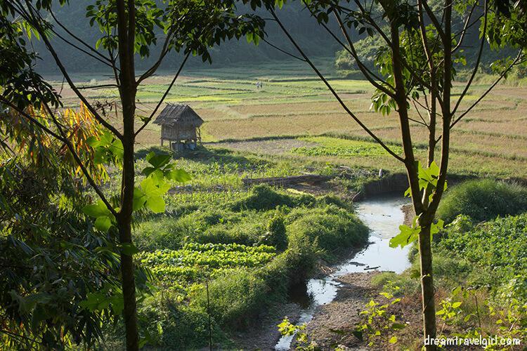 Laos_Luang_Namtha_rice-fields06