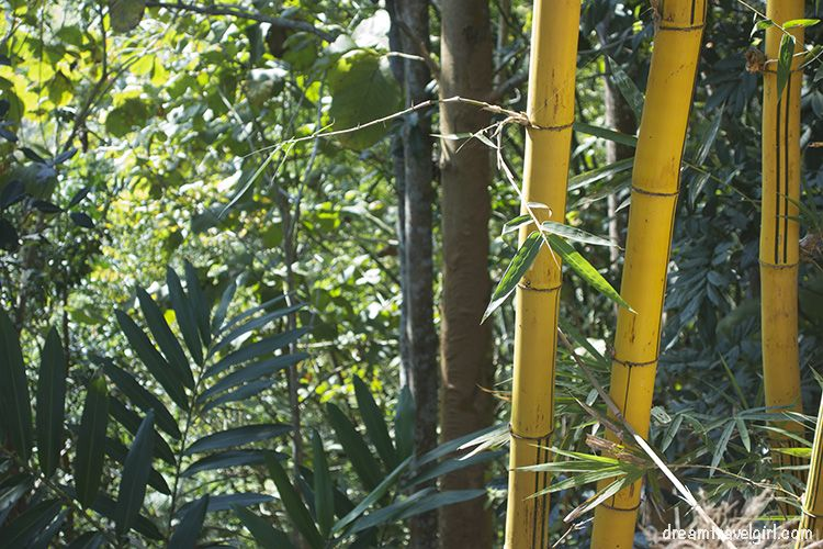 Bamboo is used for everything