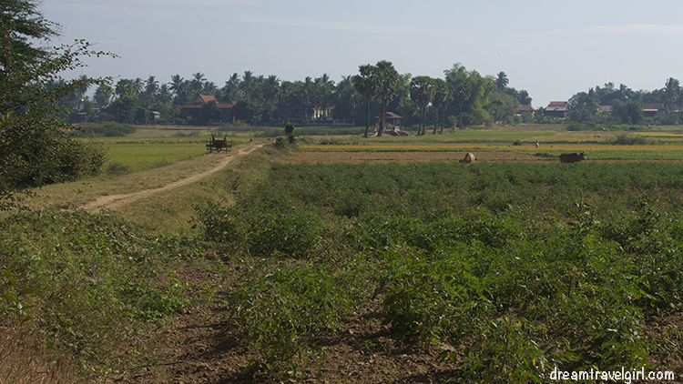 Cambodia_Kratie_Koh-Trong_fields2