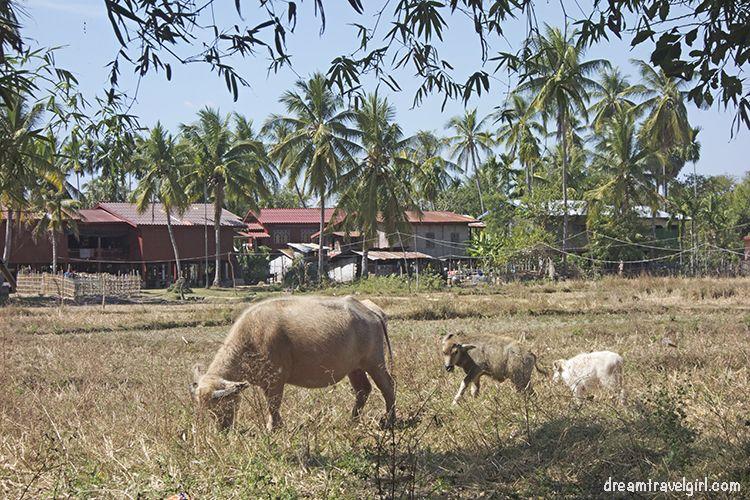 Laos_4000islands_Don-Khon_village3