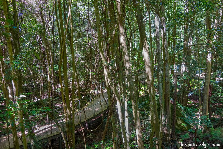 The trail in the jurassic rainforest
