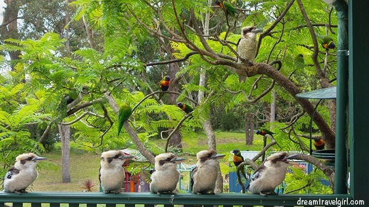 Australia_Jervis-Bay_ native-birds1