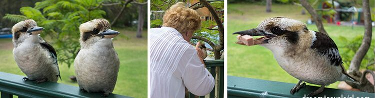 Australia_Jervis-Bay_ native-birds2
